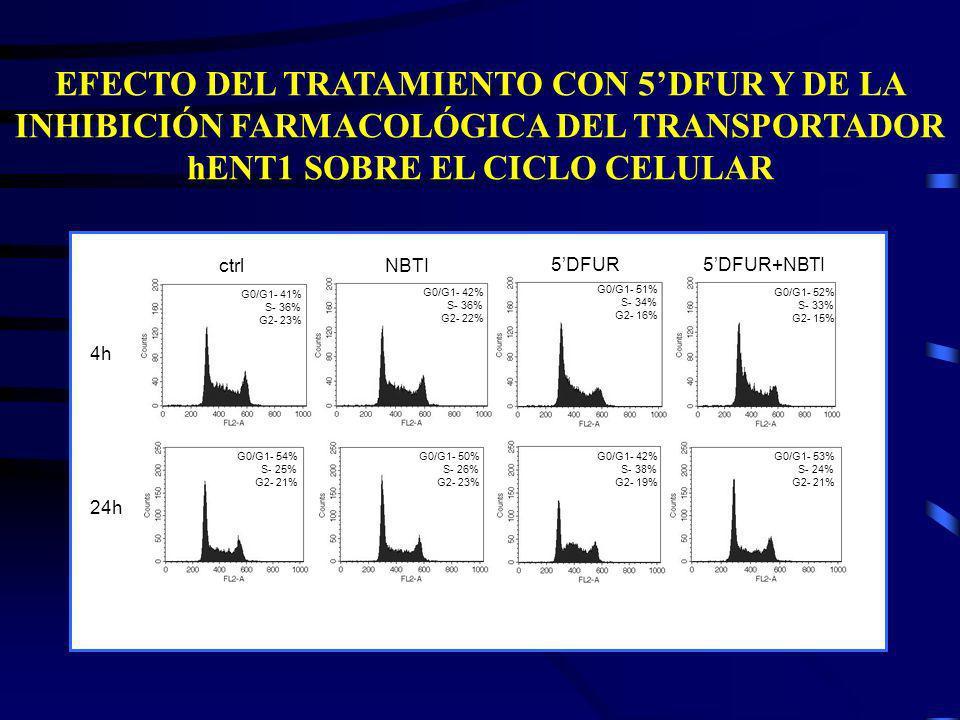 4h 24h ctrlNBTI 5DFUR5DFUR+NBTI G0/G1- 41% S- 36% G2- 23% G0/G1- 42% S- 36% G2- 22% G0/G1- 51% S- 34% G2- 16% G0/G1- 52% S- 33% G2- 15% G0/G1- 54% S-
