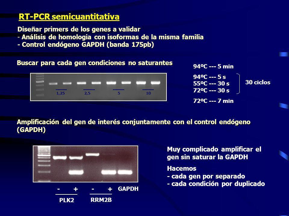 RT-PCR semicuantitativa Diseñar primers de los genes a validar - Análisis de homologia con isoformas de la misma familia - Control endógeno GAPDH (ban