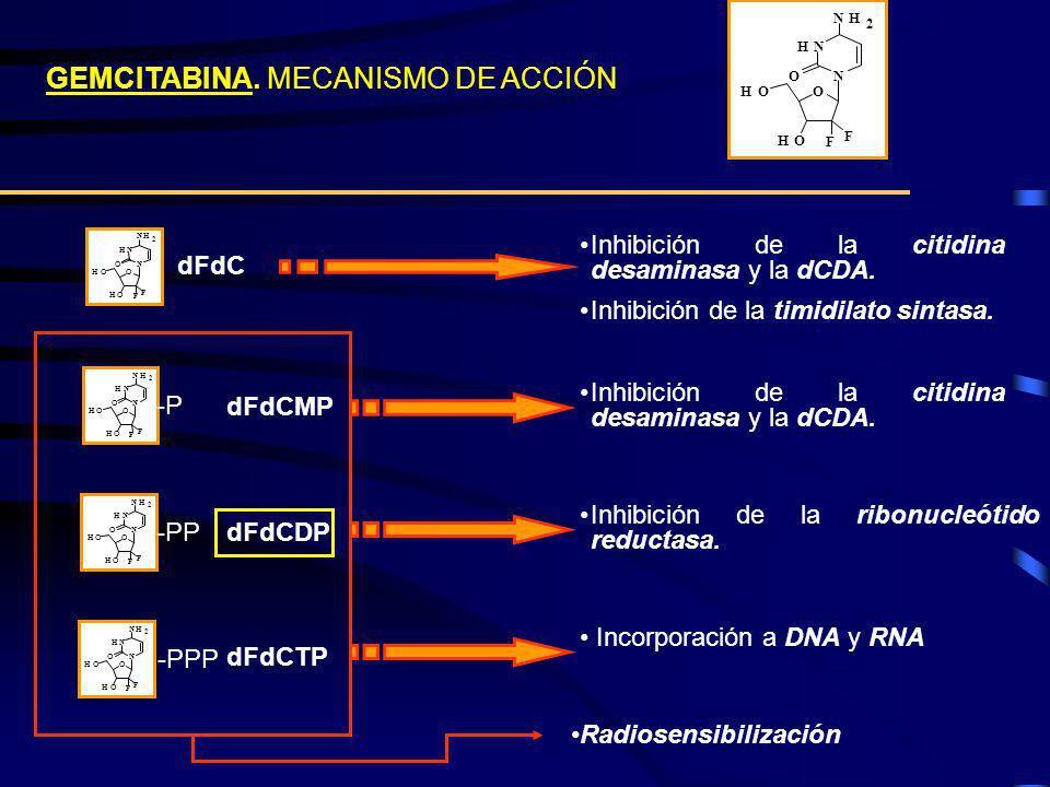 GEMCITABINA. MECANISMO DE ACCIÓN O HO HO F HN N NH 2 O F O HO HO F HN N NH 2 O F dFdC Inhibición de la citidina desaminasa y la dCDA. Inhibición de la
