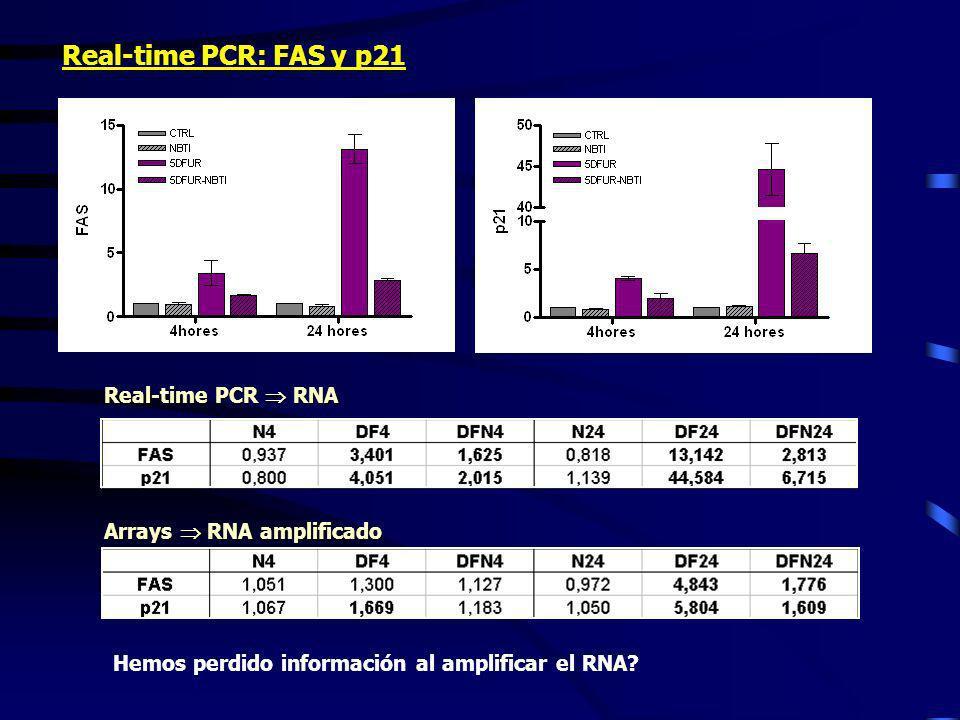 Real-time PCR: FAS y p21 Real-time PCR RNA Arrays RNA amplificado Hemos perdido información al amplificar el RNA?