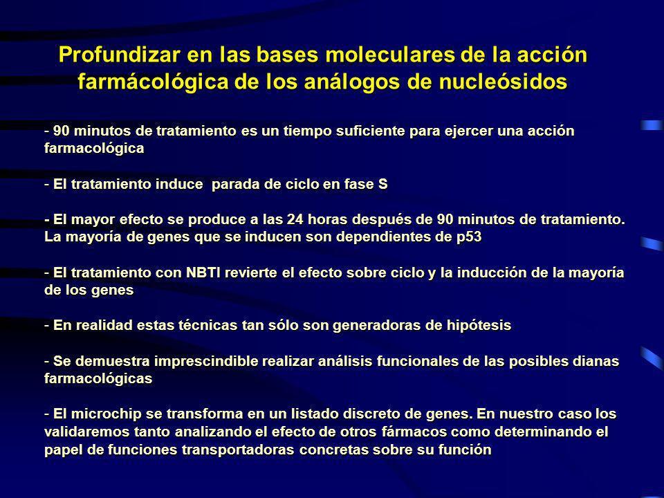 Profundizar en las bases moleculares de la acción farmácológica de los análogos de nucleósidos - 90 minutos de tratamiento es un tiempo suficiente par