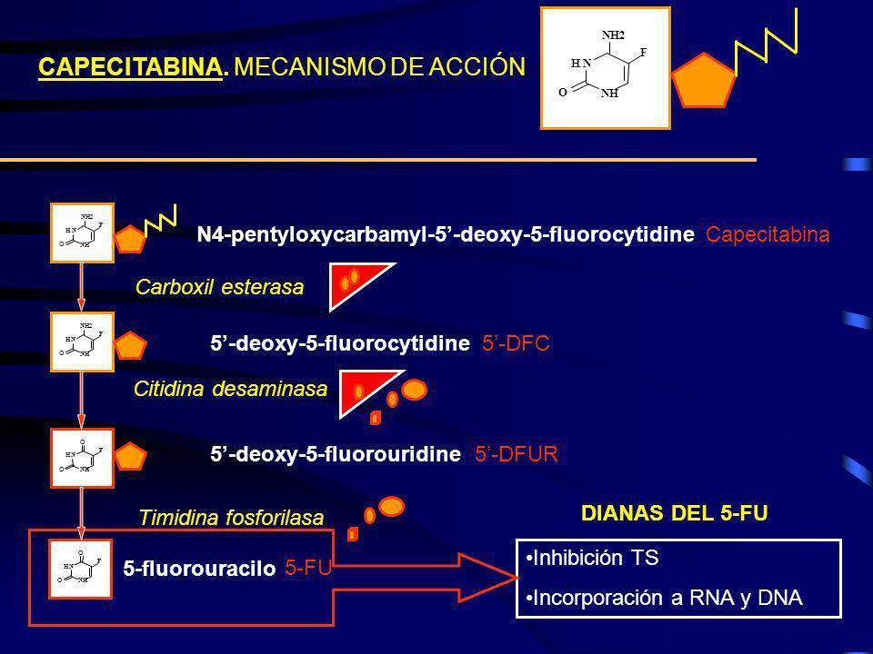CAPECITABINA. MECANISMO DE ACCIÓN Inhibición TS Incorporación a RNA y DNA DIANAS DEL 5-FU HN NH O O F 5-fluorouracilo HN NH NH2 O F HN NH O O F Carbox