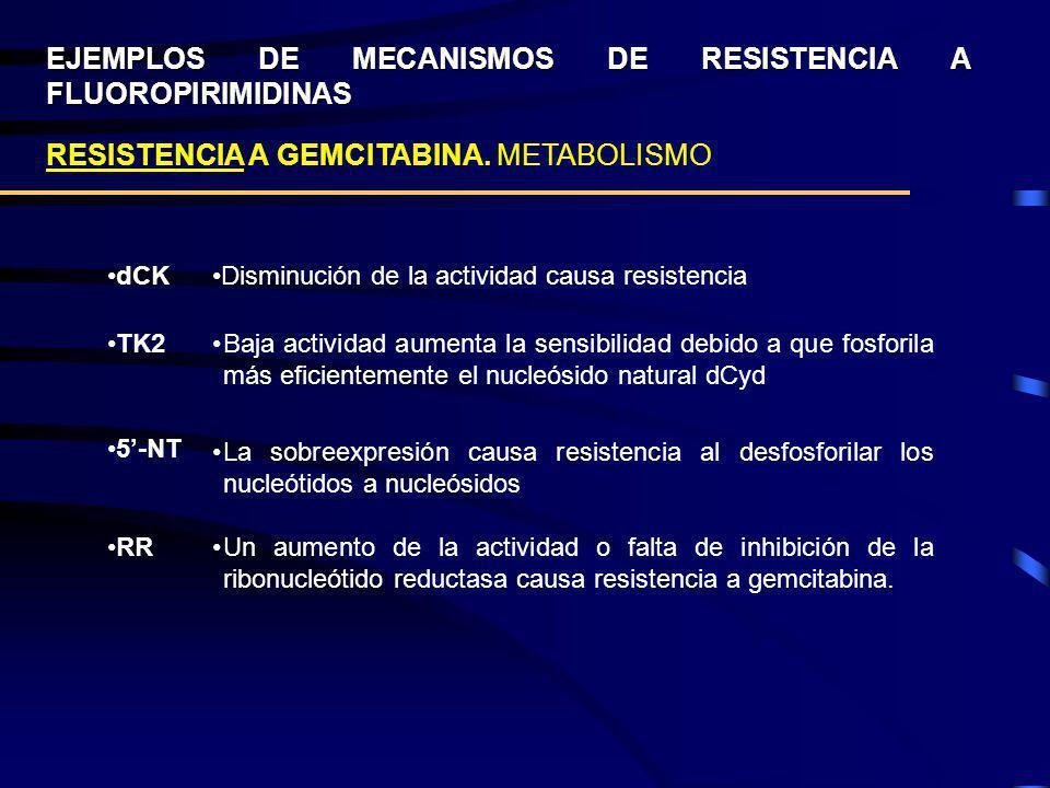 EJEMPLOS DE MECANISMOS DE RESISTENCIA A FLUOROPIRIMIDINAS RESISTENCIA A GEMCITABINA. METABOLISMO dCK TK2 Disminución de la actividad causa resistencia