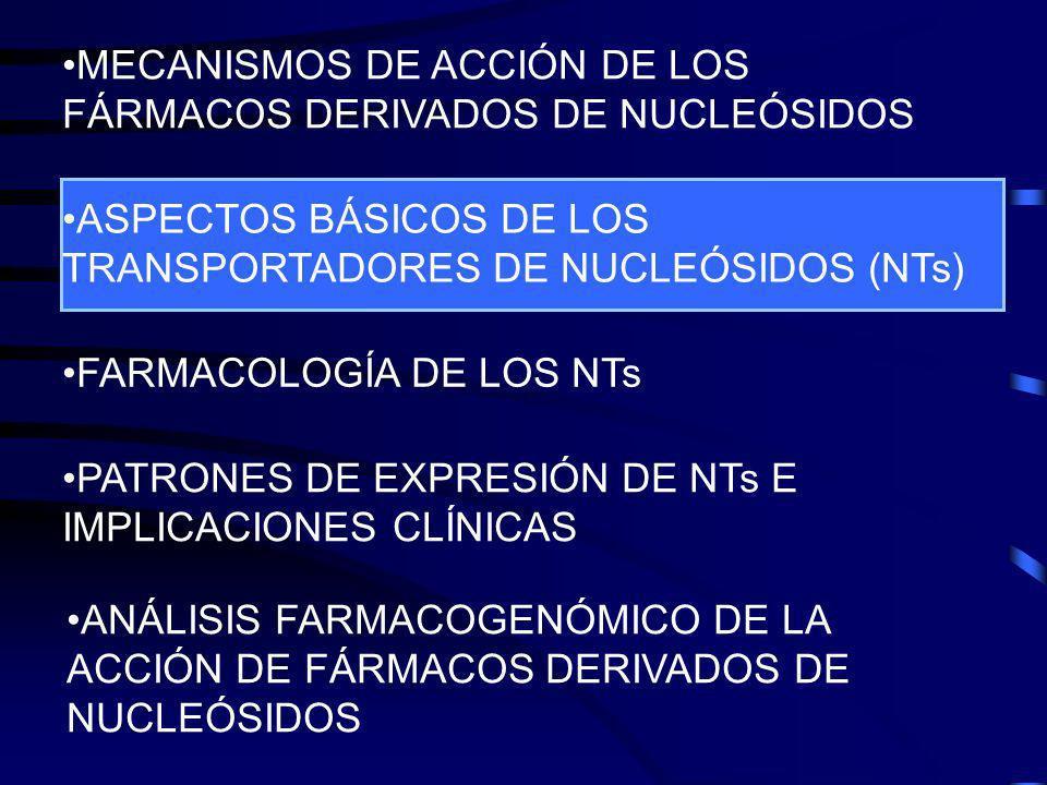 UP-HILLDOWN-HILL S S S S S Na S IN OUT IN OUT CNT Concentrative Nucleoside Transporter ENT Equilibrative Nucleoside Transporter Mecanismos de transporte de nucleósidos al interior de la célula