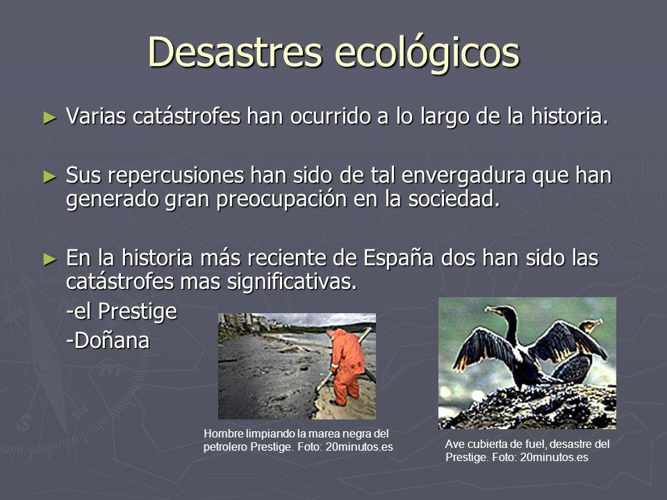 Prestige Consecuencias La marea negra afectó a toda la costa norte española.