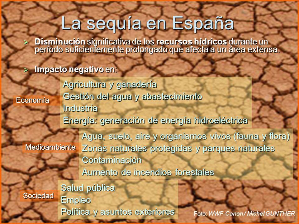 Usos del agua Uso agrícola: los cultivos de regadío tienen el mayor rendimiento económico.