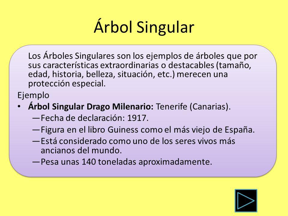 Árbol Singular Los Árboles Singulares son los ejemplos de árboles que por sus características extraordinarias o destacables (tamaño, edad, historia, b