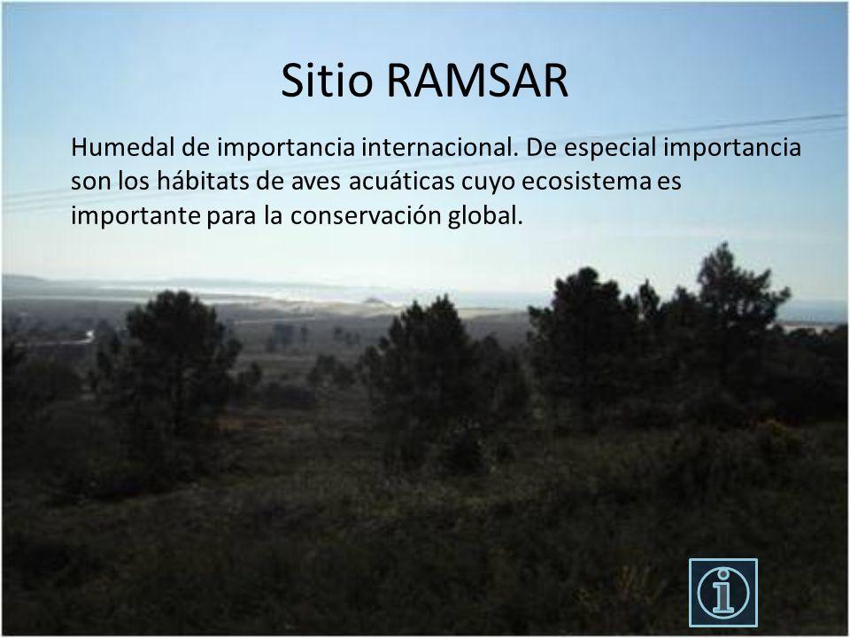 Sitio RAMSAR Humedal de importancia internacional. De especial importancia son los hábitats de aves acuáticas cuyo ecosistema es importante para la co