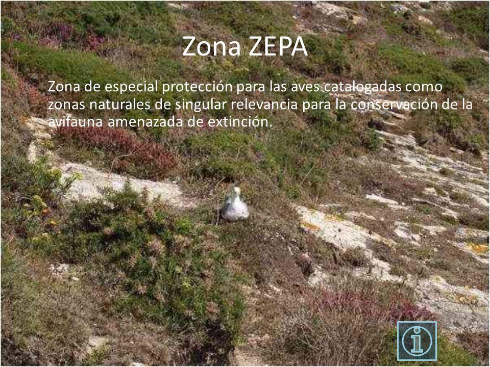 Zona ZEPA Zona de especial protección para las aves catalogadas como zonas naturales de singular relevancia para la conservación de la avifauna amenaz