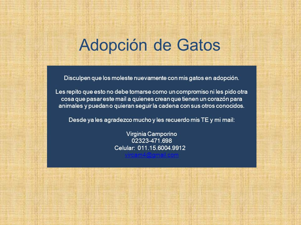 Adopción de Gatos Disculpen que los moleste nuevamente con mis gatos en adopción. Les repito que esto no debe tomarse como un compromiso ni les pido o