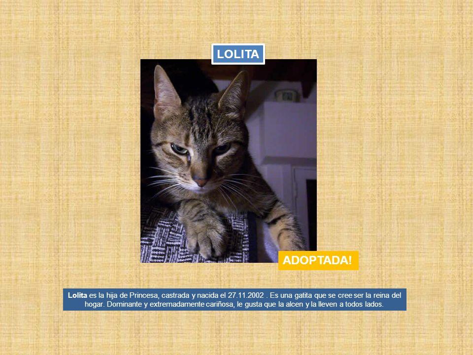 Lolita es la hija de Princesa, castrada y nacida el 27.11.2002. Es una gatita que se cree ser la reina del hogar. Dominante y extremadamente cariñosa,