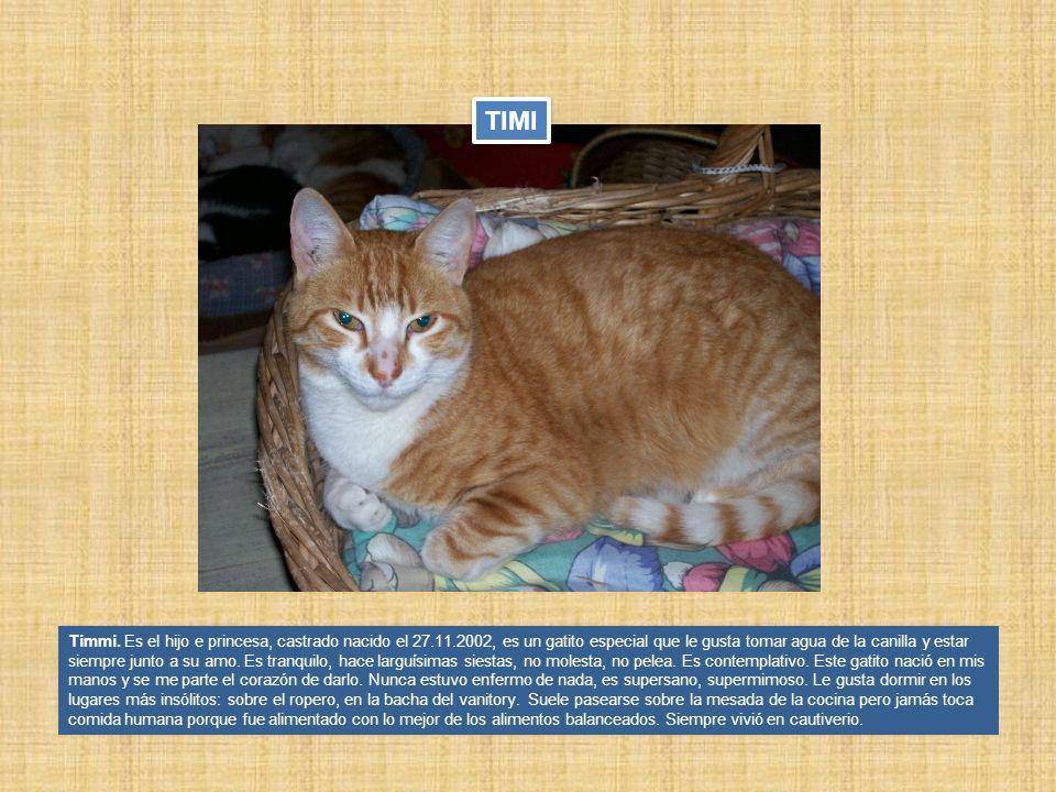 Timmi. Es el hijo e princesa, castrado nacido el 27.11.2002, es un gatito especial que le gusta tomar agua de la canilla y estar siempre junto a su am