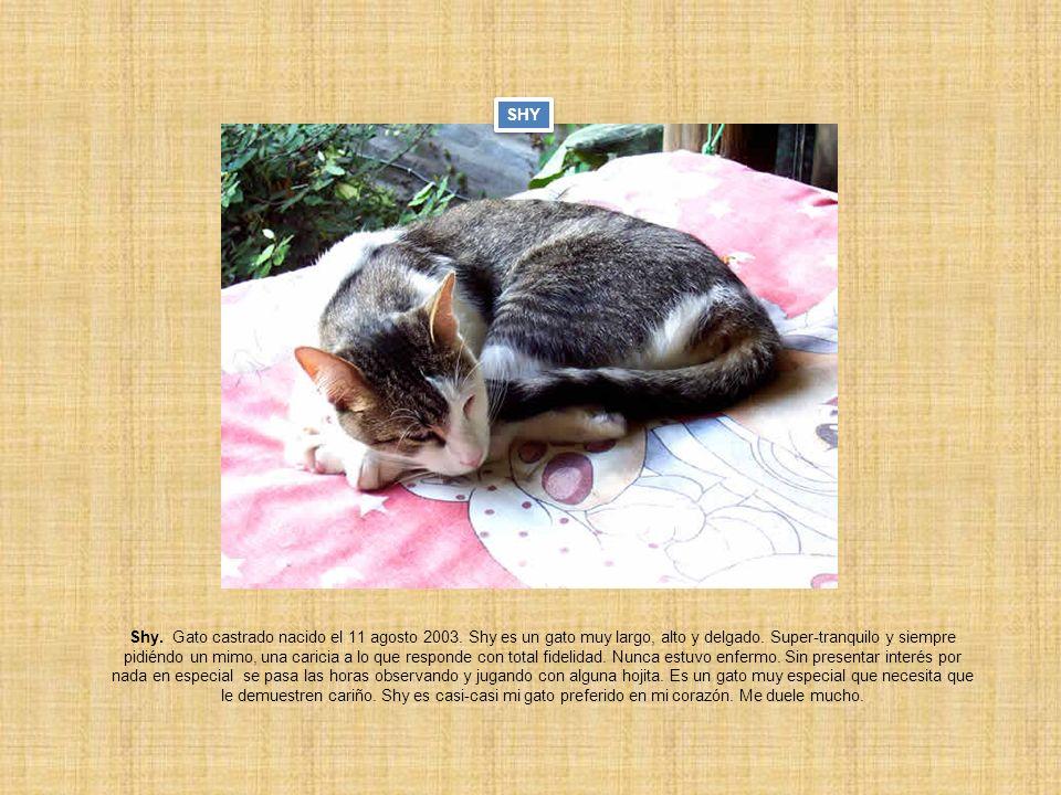 Shy. Gato castrado nacido el 11 agosto 2003. Shy es un gato muy largo, alto y delgado. Super-tranquilo y siempre pidiéndo un mimo, una caricia a lo qu