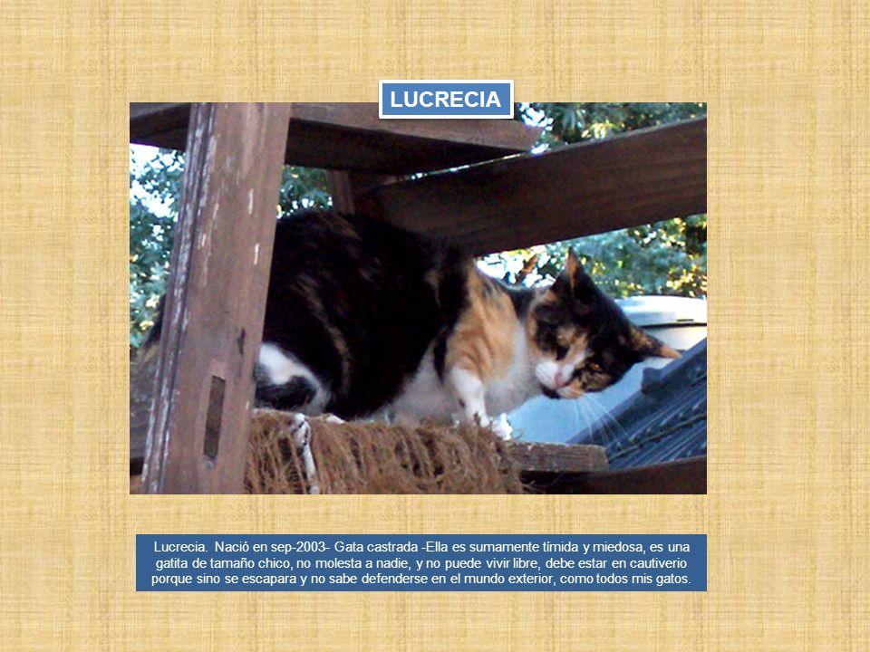Lucrecia. Nació en sep-2003- Gata castrada -Ella es sumamente tímida y miedosa, es una gatita de tamaño chico, no molesta a nadie, y no puede vivir li