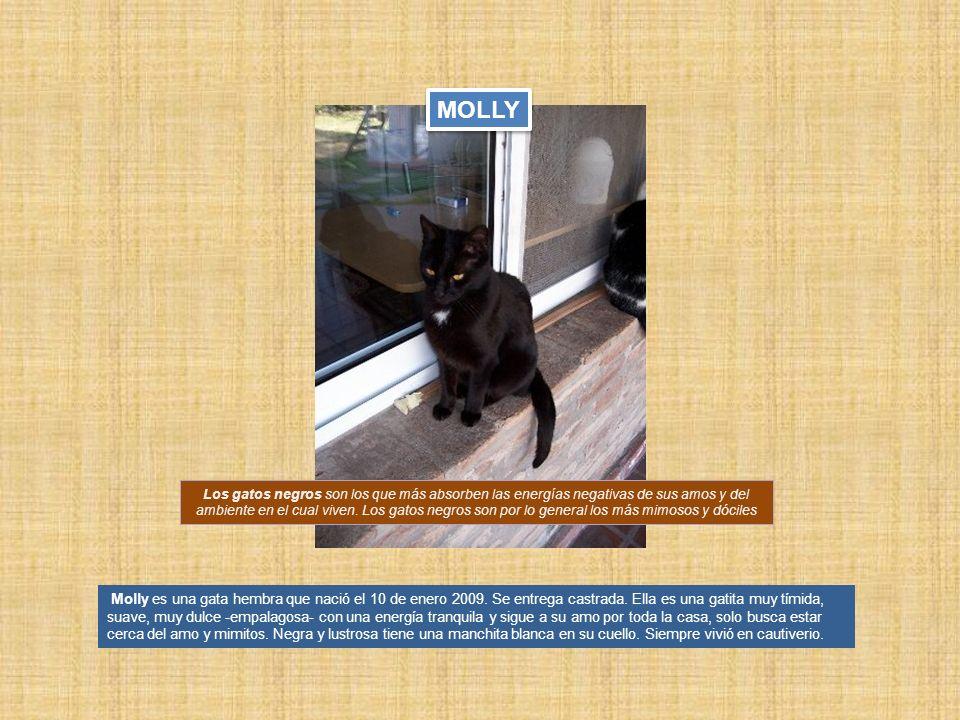 Molly es una gata hembra que nació el 10 de enero 2009. Se entrega castrada. Ella es una gatita muy tímida, suave, muy dulce -empalagosa- con una ener