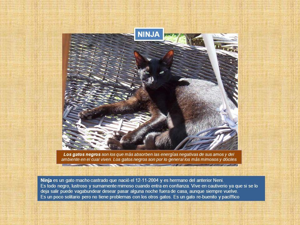 Ninja es un gato macho castrado que nació el 12-11-2004 y es hermano del anterior Neni. Es todo negro, lustroso y sumamente mimoso cuando entra en con