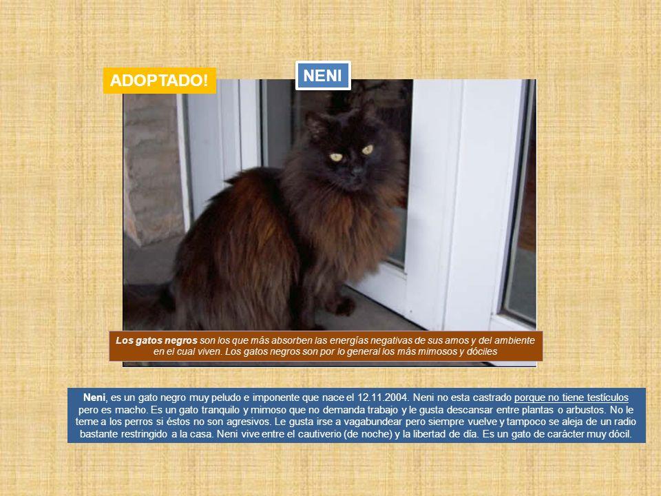 Neni, es un gato negro muy peludo e imponente que nace el 12.11.2004. Neni no esta castrado porque no tiene testículos pero es macho. Es un gato tranq