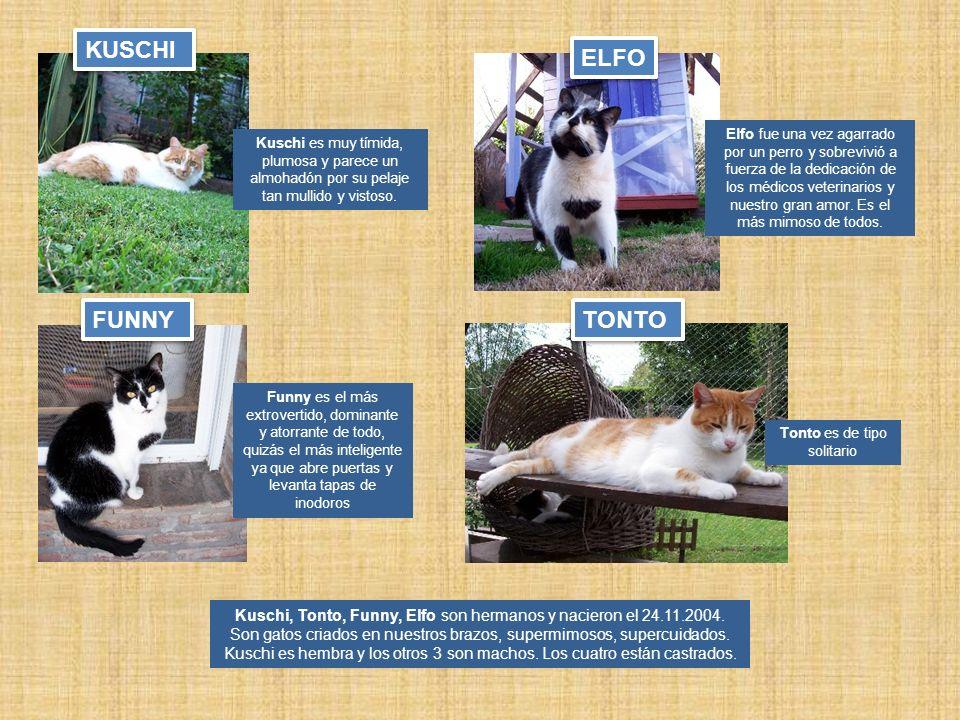 Kuschi, Tonto, Funny, Elfo son hermanos y nacieron el 24.11.2004. Son gatos criados en nuestros brazos, supermimosos, supercuidados. Kuschi es hembra