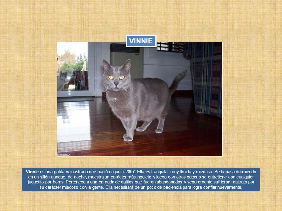 Vinnie es una gatita ya castrada que nació en junio 2007. Ella es tranquila, muy tímida y miedosa. Se la pasa durmiendo en un sillón aunque, de noche,