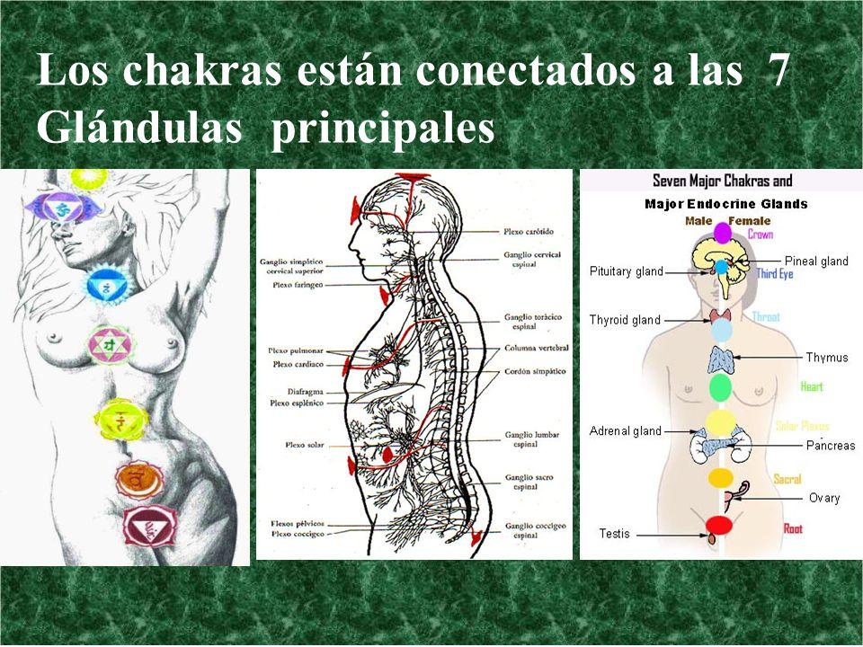 Los chakras están conectados a las 7 Glándulas principales