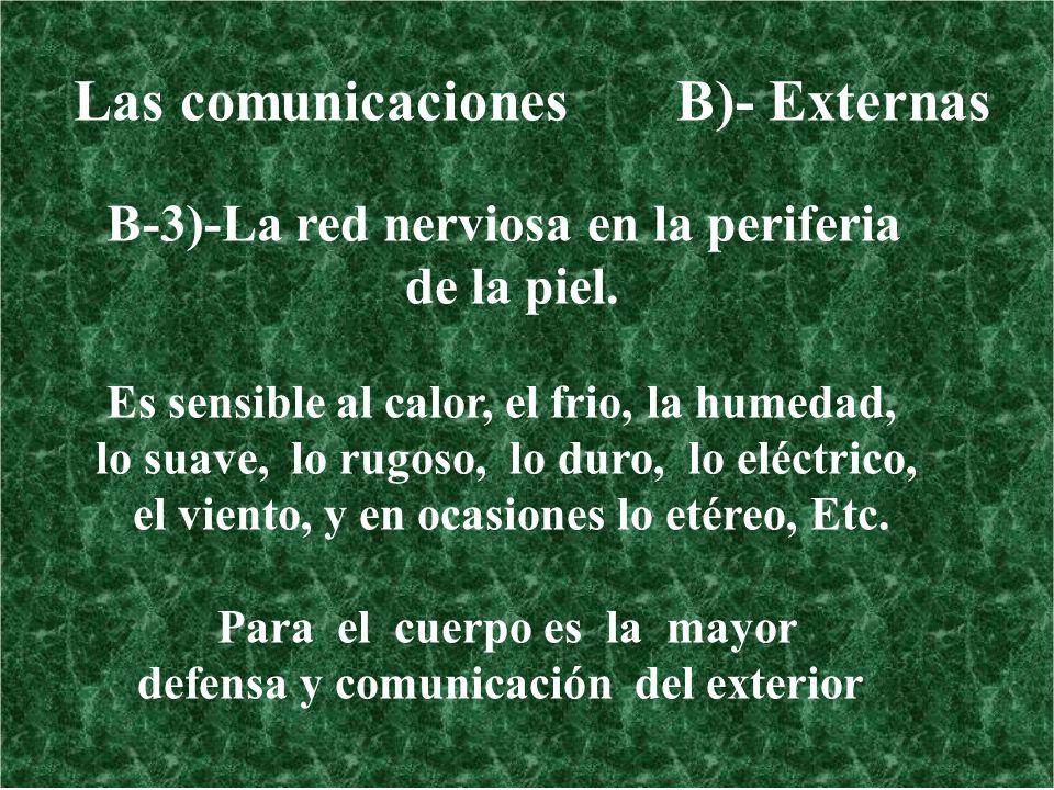 Las comunicaciones B)- Externas B-3)-La red nerviosa en la periferia de la piel. Es sensible al calor, el frio, la humedad, lo suave, lo rugoso, lo du