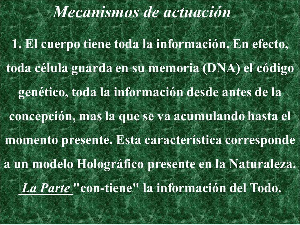 Mecanismos de actuación 1. El cuerpo tiene toda la información. En efecto, toda célula guarda en su memoria (DNA) el código genético, toda la informac