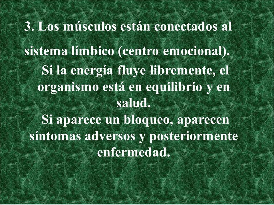 3. Los músculos están conectados al sistema límbico (centro emocional). Si la energía fluye libremente, el organismo está en equilibrio y en salud. Si
