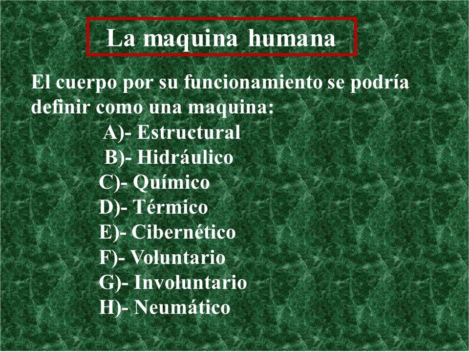 La maquina humana El cuerpo por su funcionamiento se podría definir como una maquina: A)- Estructural B)- Hidráulico C)- Químico D)- Térmico E)- Ciber