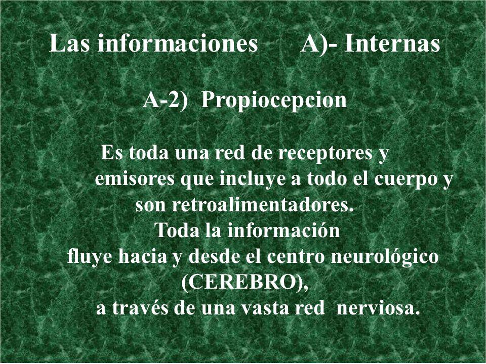 Las informaciones A)- Internas A-2) Propiocepcion Es toda una red de receptores y emisores que incluye a todo el cuerpo y son retroalimentadores. Toda