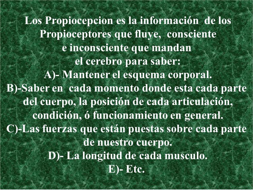 Los Propiocepcion es la información de los Propioceptores que fluye, consciente e inconsciente que mandan el cerebro para saber: A)- Mantener el esque