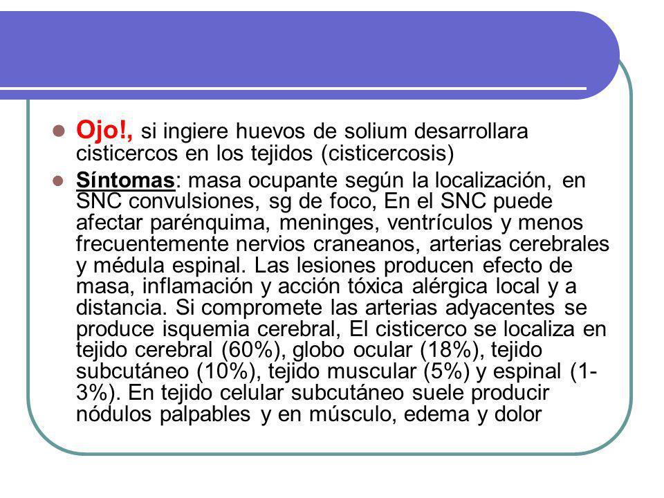 Ojo!, si ingiere huevos de solium desarrollara cisticercos en los tejidos (cisticercosis) Síntomas: masa ocupante según la localización, en SNC convulsiones, sg de foco, En el SNC puede afectar parénquima, meninges, ventrículos y menos frecuentemente nervios craneanos, arterias cerebrales y médula espinal.