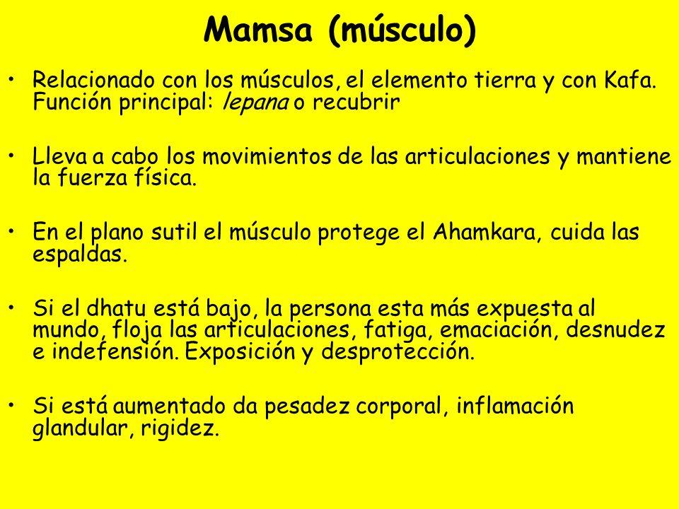 Mamsa (músculo) Relacionado con los músculos, el elemento tierra y con Kafa. Función principal: lepana o recubrir Lleva a cabo los movimientos de las