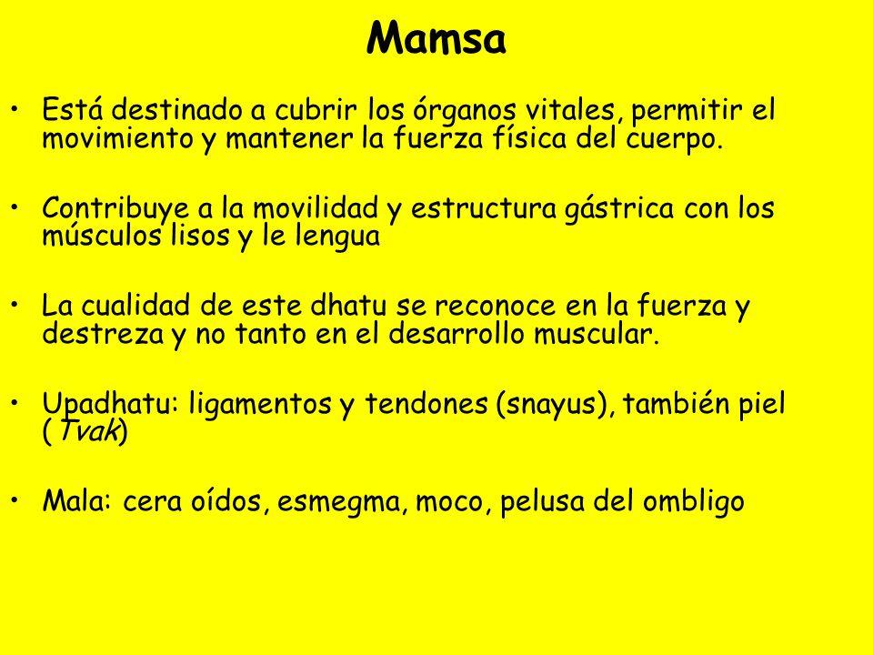 Mamsa Está destinado a cubrir los órganos vitales, permitir el movimiento y mantener la fuerza física del cuerpo. Contribuye a la movilidad y estructu