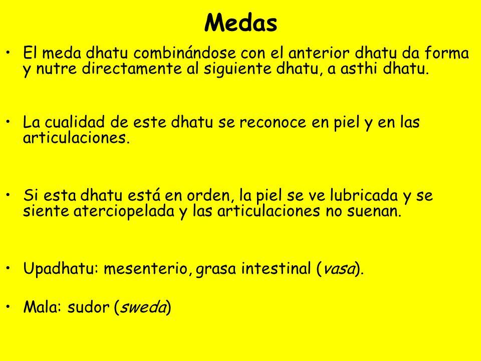 Medas El meda dhatu combinándose con el anterior dhatu da forma y nutre directamente al siguiente dhatu, a asthi dhatu. La cualidad de este dhatu se r