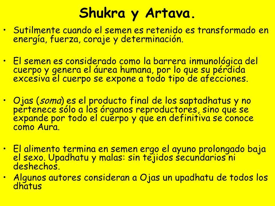Shukra y Artava. Sutilmente cuando el semen es retenido es transformado en energía, fuerza, coraje y determinación. El semen es considerado como la ba