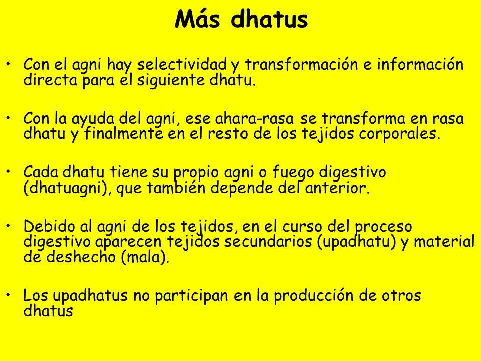 Más dhatus Con el agni hay selectividad y transformación e información directa para el siguiente dhatu. Con la ayuda del agni, ese ahara-rasa se trans
