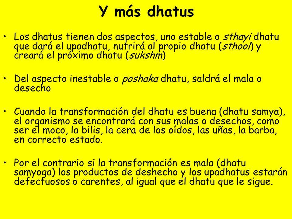 Y más dhatus Los dhatus tienen dos aspectos, uno estable o sthayi dhatu que dará el upadhatu, nutrirá al propio dhatu (sthool) y creará el próximo dha