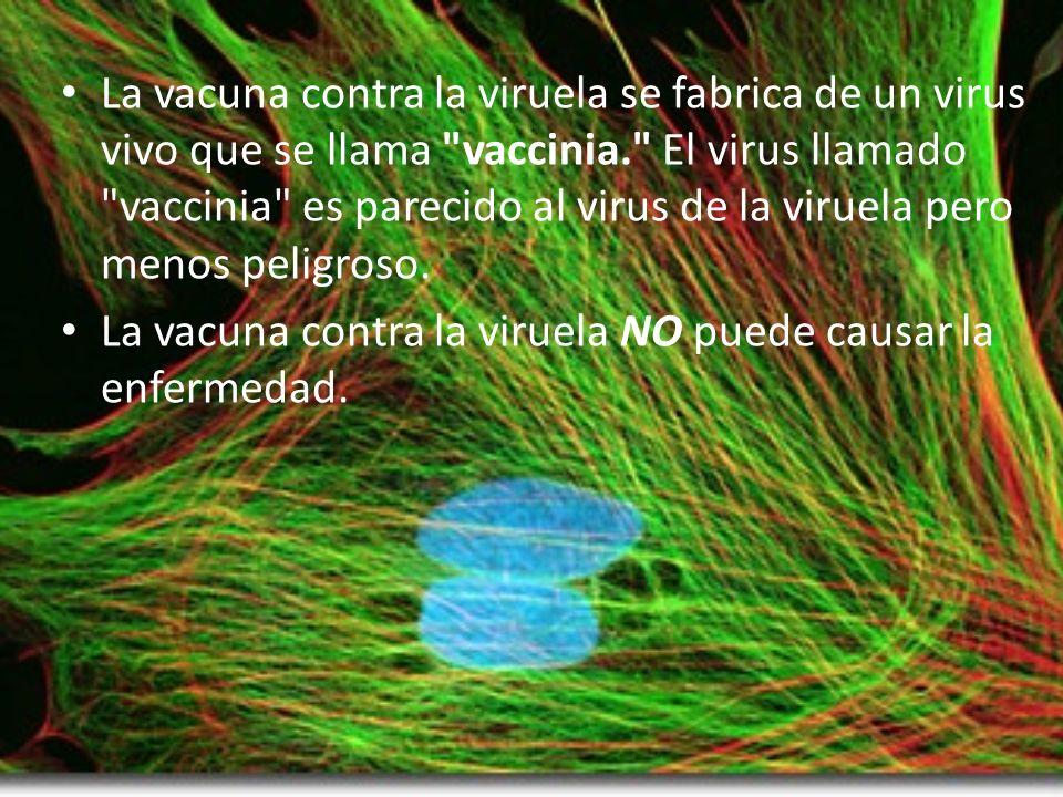 La vacuna contra la viruela se fabrica de un virus vivo que se llama