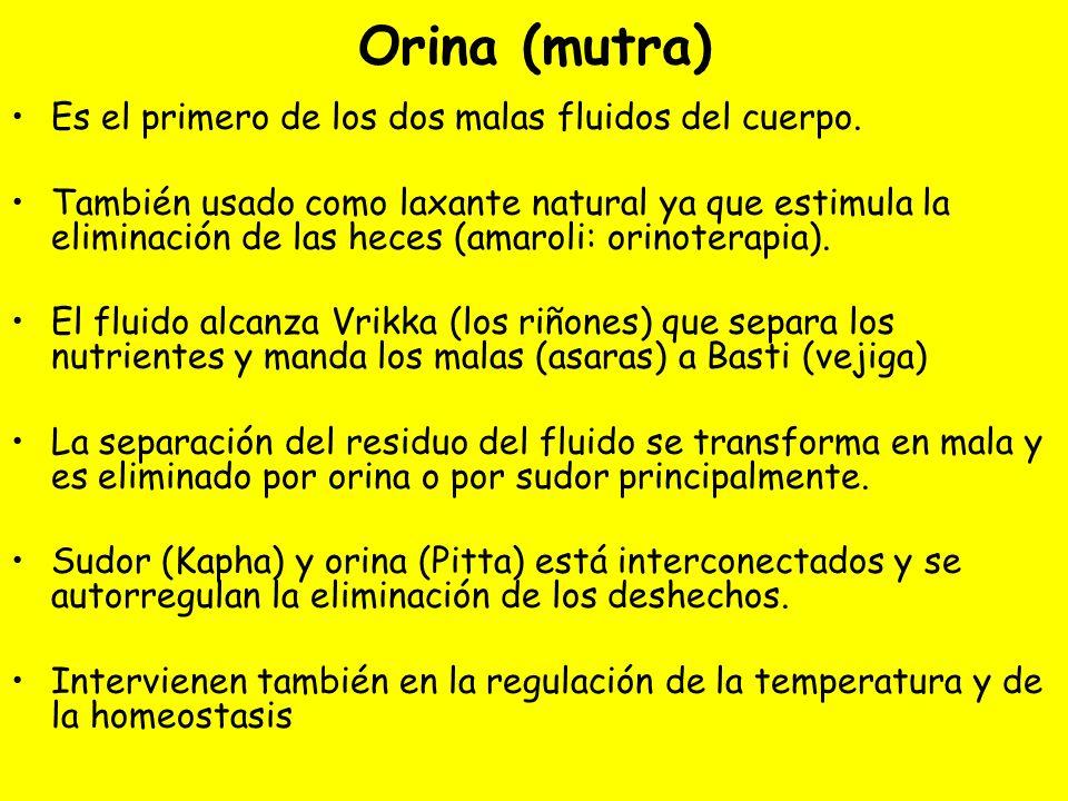 Orina (mutra) Es el primero de los dos malas fluidos del cuerpo. También usado como laxante natural ya que estimula la eliminación de las heces (amaro