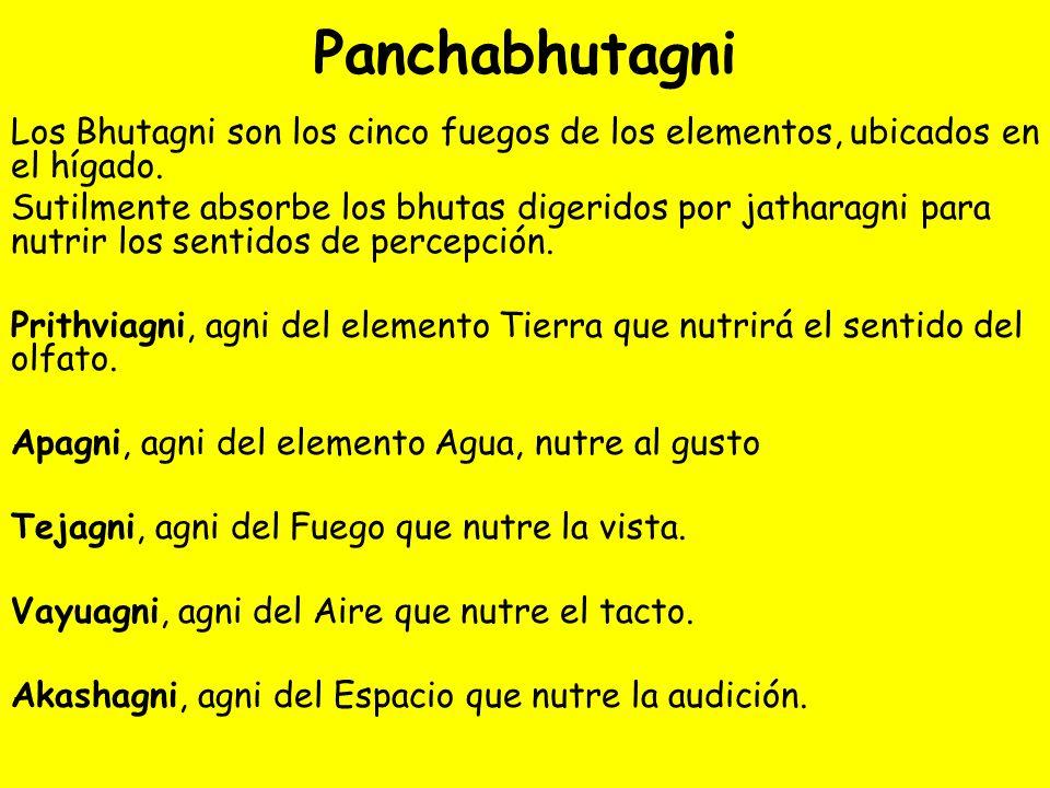 Panchabhutagni Los Bhutagni son los cinco fuegos de los elementos, ubicados en el hígado. Sutilmente absorbe los bhutas digeridos por jatharagni para