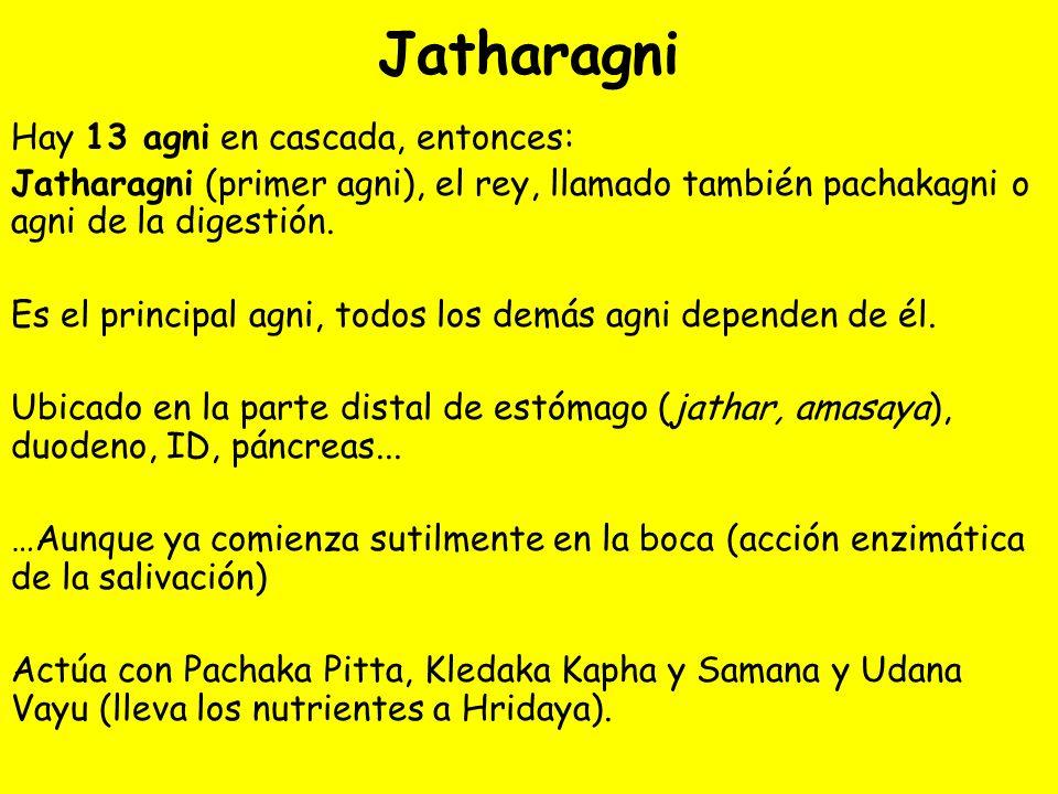 Jatharagni Hay 13 agni en cascada, entonces: Jatharagni (primer agni), el rey, llamado también pachakagni o agni de la digestión. Es el principal agni