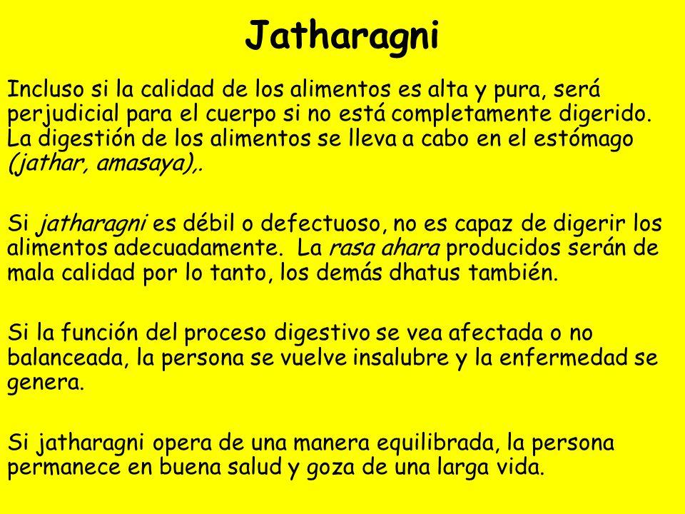 Jatharagni Incluso si la calidad de los alimentos es alta y pura, será perjudicial para el cuerpo si no está completamente digerido. La digestión de l