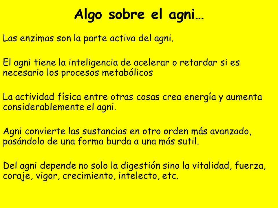 Algo sobre el agni… Las enzimas son la parte activa del agni. El agni tiene la inteligencia de acelerar o retardar si es necesario los procesos metabó