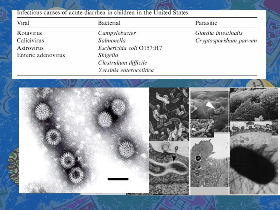 LAS SALES DE REHIDRATACIÓN ORAL – SRO n n Ingredientes:mmol/Lt (fórmula anterior al 2002) n n Sodio 75 (90) n n Cloro 65 (80) n n Potasio 20 (20) n n Citrato 10 (10) n n Glucosa 75 (110) n n Osmolaridad245 (311)