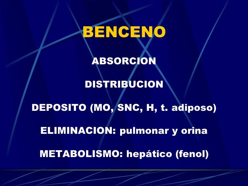 BENCENO ABSORCION DISTRIBUCION DEPOSITO (MO, SNC, H, t. adiposo) ELIMINACION: pulmonar y orina METABOLISMO: hepático (fenol)