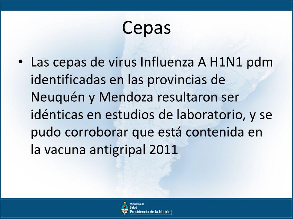 Cepas Las cepas de virus Influenza A H1N1 pdm identificadas en las provincias de Neuquén y Mendoza resultaron ser idénticas en estudios de laboratorio, y se pudo corroborar que está contenida en la vacuna antigripal 2011