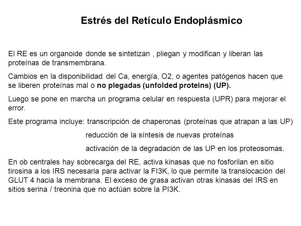 Fisiopatología Alteraciones primarias Obesidad central (grasa intraabdominal visceral y SC) El exceso adipocitario puede ser por: 1)Hiperplasia: aumen