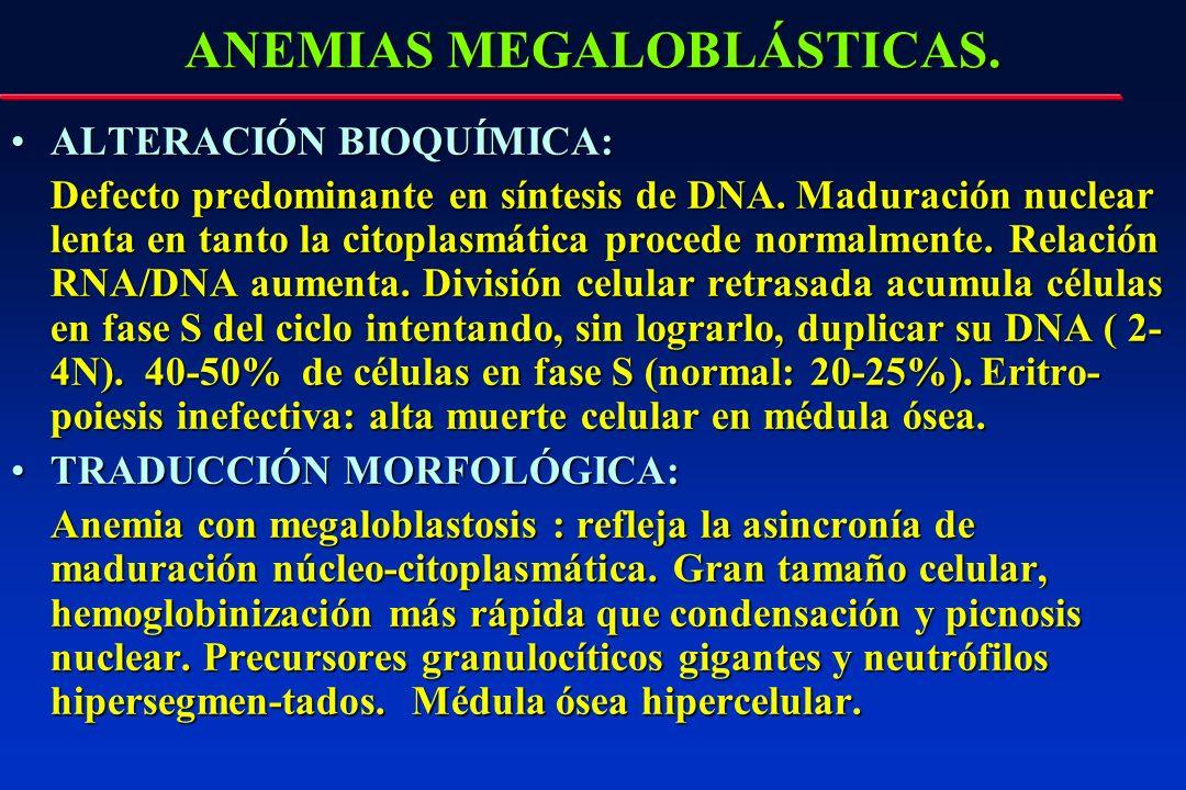 ANEMIAS MEGALOBLÁSTICAS. ALTERACIÓN BIOQUÍMICA:ALTERACIÓN BIOQUÍMICA: Defecto predominante en síntesis de DNA. Maduración nuclear lenta en tanto la ci