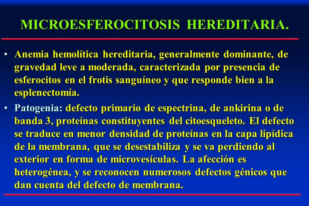 MICROESFEROCITOSIS HEREDITARIA. Anemia hemolítica hereditaria, generalmente dominante, de gravedad leve a moderada, caracterizada por presencia de esf