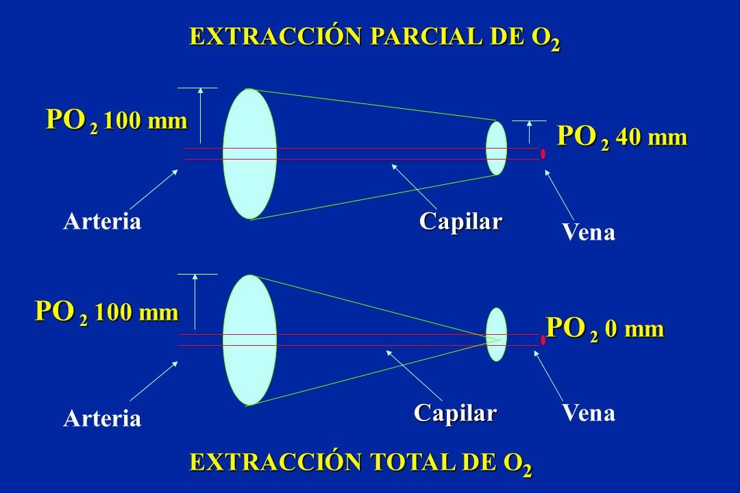 PO 2 100 mm PO 2 0 mm PO 2 40 mm Capilar Capilar Vena Arteria EXTRACCIÓN PARCIAL DE O 2 EXTRACCIÓN TOTAL DE O 2